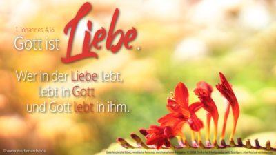 Wir jedenfalls haben erkannt und halten im Glauben daran fest, dass Gott uns liebt. Gott ist Liebe. Wer in der Liebe lebt, lebt in Gott und Gott lebt in ihm.