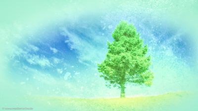 Ein saftig grüner Baum vor einem blauen Wolkenhimmel im März.