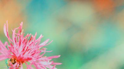 Nahaufnahme von einer kleinen Sommerblume.