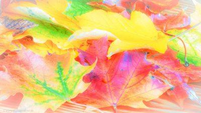 Unterschiedlich gefärbte Herbstblätter auf einer Holzoberfläche.