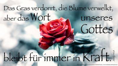Das Gras verdorrt, die Blume verwelkt, aber das Wort unseres Gottes bleibt für immer in Kraft.