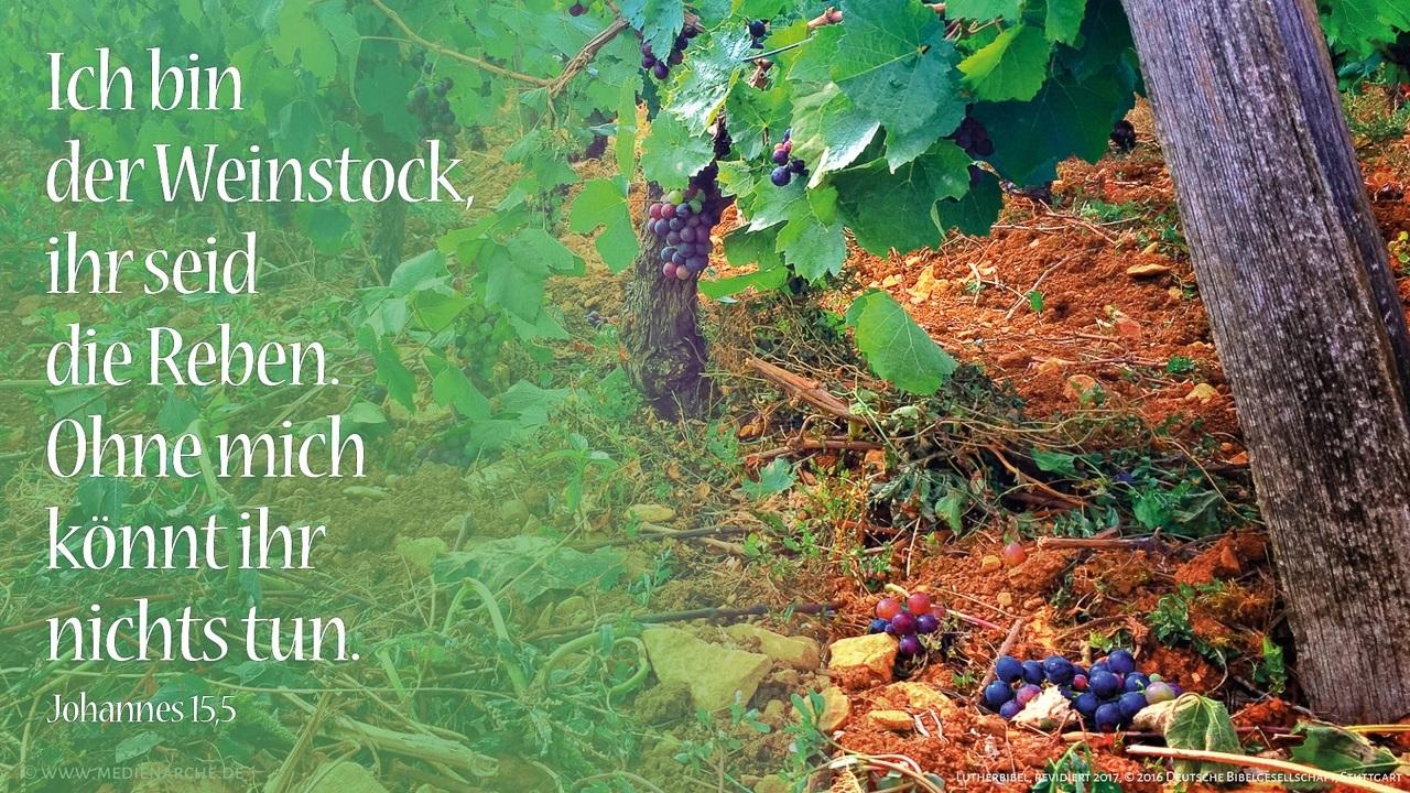 Ich bin der Weinstock, ihr seid die Reben. Wer in mir bleibt und ich in ihm, der bringt viel Frucht; denn ohne mich könnt ihr nichts tun.