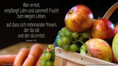 Wer erntet, empfängt Lohn und sammelt Frucht zum ewigen Leben, auf dass sich miteinander freuen, der da sät und der da erntet.