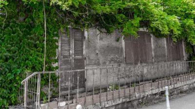 Ein altes Haus mit grünen Kletterpflanzen