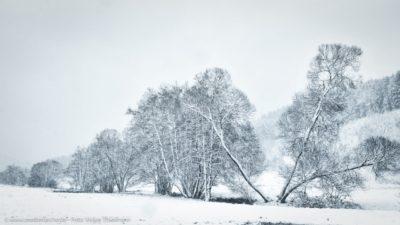 Ein winterlicher Morgen, schneebedeckte Landschaft mit einigen Bäumen im Vordergrund.