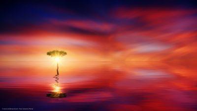 Eine Szene, wie aus einem Traum. Ein einsamer Baum, der aus dem Wasser heraus wächst. Eine hell scheinende Sonne im Hintergrund.