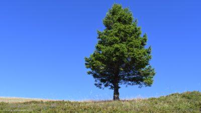 Ein einsamer Baum auf einem Feld vor strahlend blauem Himmel.