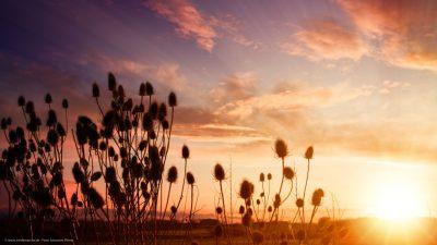 Ein herrlich schöner Sonnenaufang. Einige Distel-Pflanzen im Vordergrund.