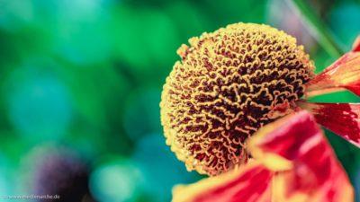 Eine Blumenknospe mit einer interessanten, harmonischen Stengelstruktur.
