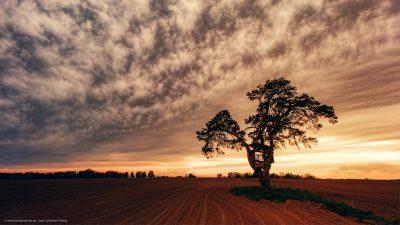 Ein einsam stehender Baum mit einem Baumhaus drin, auf einem umgepflügten Feld.