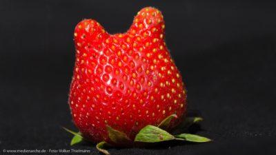 Ein Erdbeere mit zwei Spitzen, die wie zwei Ohren aussehen.
