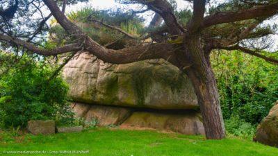 Ein von Gräsern überwachsener Fels