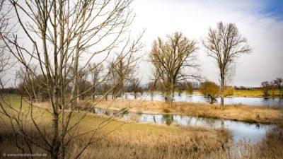Eine Fluss im Spätwinter. Kahle Bäume und Schilf säumen die Flussufer. Ein Wolkenbehangener Himmel im Hintergrund.