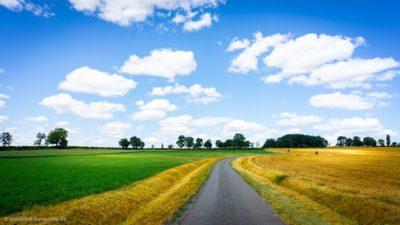 Eine gelb-grüne Landschaft, scheinbar von einer Straße geteilt.