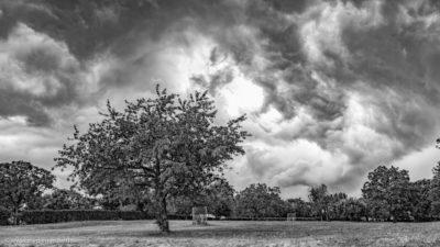 Eine Wiese mit Baumbestand. Der Himmel bedeckt von Gewitterwolken. Schwarz-weiß Fotografie.