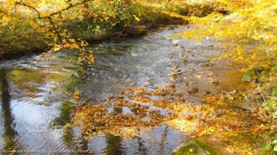 Ein Waldbächlein im Herbst