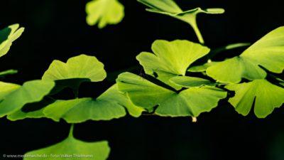 Ein kleines Insekt, das auf einer Wasserpflanze Platz genommen hat, und einen Schatten wirft.