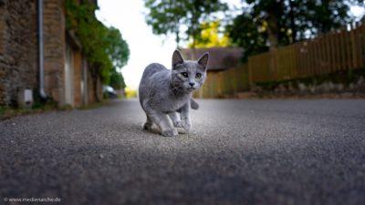 Eine zum Sprung ansetzende Katze auf einer Straße.