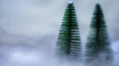 Künstliche kleine Miniaturtannen in einer weissen, schneeweissen Umgebung.