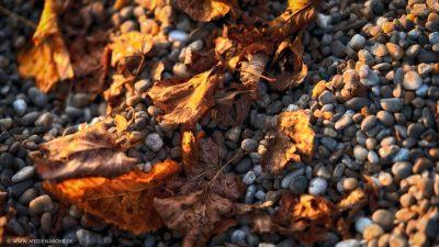Warm von der Sonne beleuchtetes Herbstlaub, das auf dem mit rundlichen Kieselsteinen belegten Boden liegt.