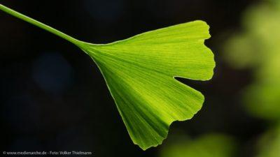 Nahaufnahme von einem grünen Blatt, beleuchtet vom Sonnenschein.
