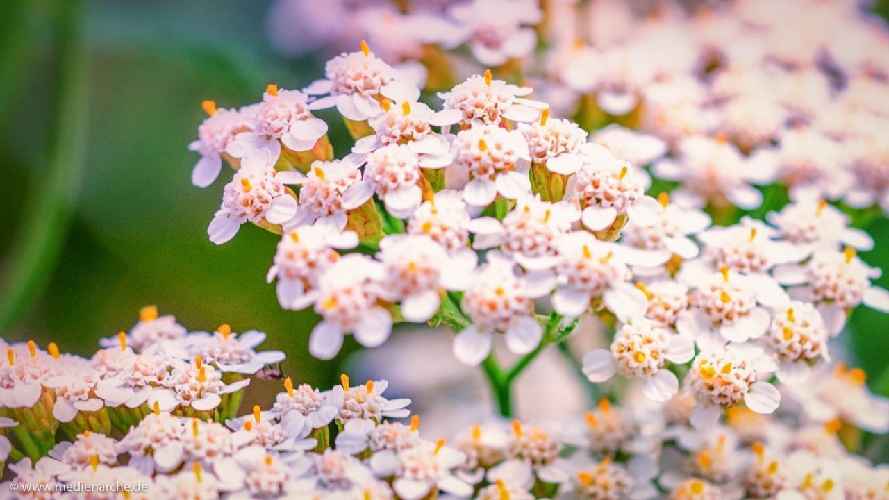 Blumensträuße der Natur – Medienarche
