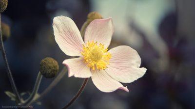 Nahaufnahme einer offenen Blume.