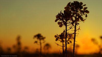 Ein Feld im Licht der aufgehenden Sonne.