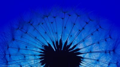 Nahaufnahme einer Pusteblume vor blauem Himmel.
