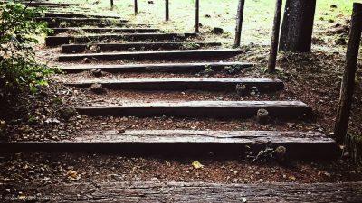 Blick von unten auf eine recht einfache Treppe im Waldboden, die nach oben führt.