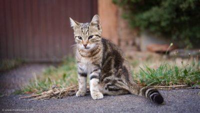 Ein kleines Kätzchen, das halb neugierig, halb skeptisch dreinschaut.