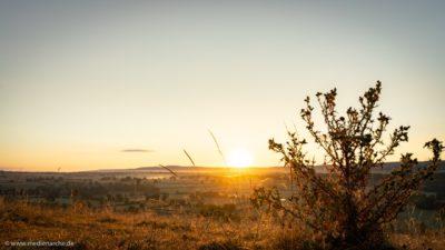 Ein strahlender Sonnenaufgang vor einem strahlendblauen Himmel in Burgund, einige Pflanzen im Vordergrund.