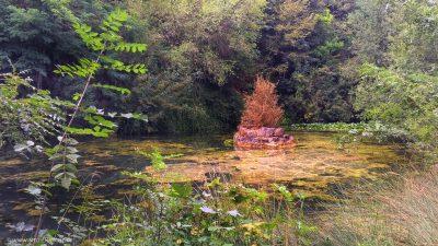 Ein Teich mitten im Grünen, der von Algen durchzogen ist und in dessen Mitte sich eine kleine steinerne Insel befindet.