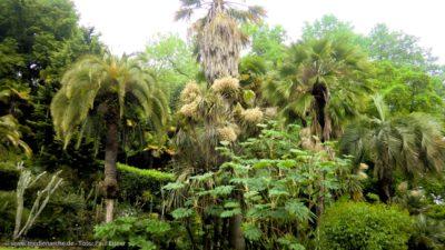 Eine üppige Vegetation mit Palmen