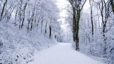 Ein Waldweg im Winter.