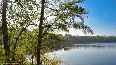 Ein stiller Waldsee