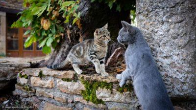 Zwei Katzen an einer Steinmauer die sich scheinbar begrüßen.
